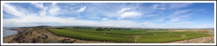 Destiny Ridge Vineyard - Horse Heaven Hills AVA in Washington