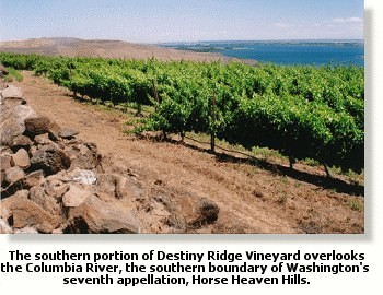 Destiny Ridge Vineyard overlooking the Columbia River