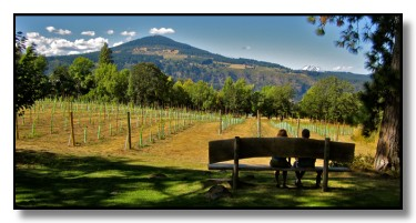 Cathedral Ridge vineyard view