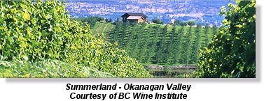 Vineyard in Summerland, British Columbia
