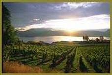 Sunset from an Okanagan Vineyard