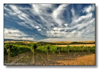 washington s walla walla valley wineries wine and wine country